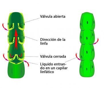 vaso lifático